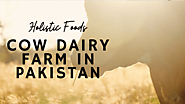 Livestock Business Milk & Meat Animals in Pakistan| Dairy & Meat Farming - Holistic Foods