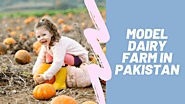 Model Dairy Farm in Pakistan - The Best Option For Business Growth - Articles - Holistic technologies software house