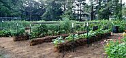 How to Grow a Straw Bale Vegetable Garden in small place