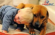 Tips to handle pet relocation with the help of packers and movers in Bangalore