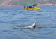Dolphin trip in Goa | Dolphin Show | Boat Tour with Sightseeing