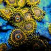 Blueearth Aquarium